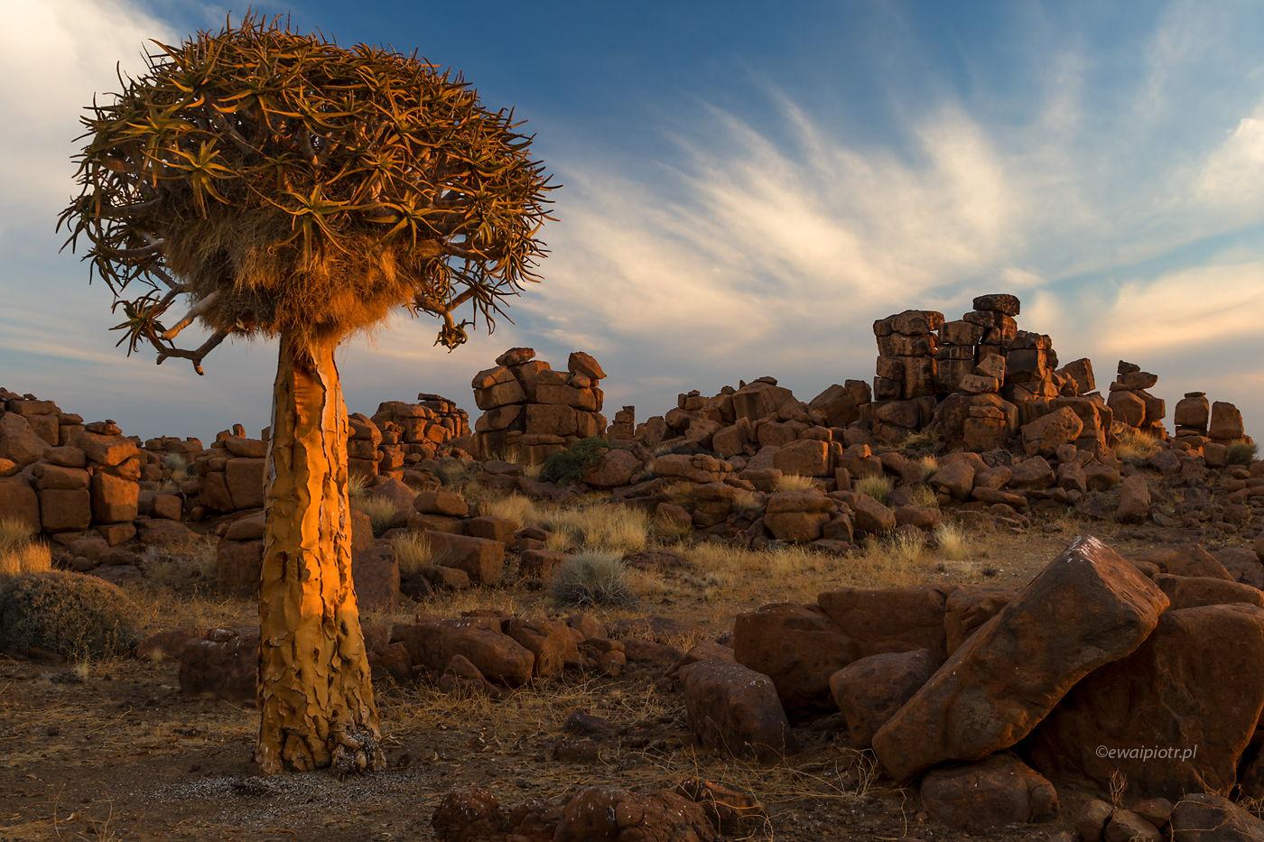 Ciepłe namibijskie popołudnie