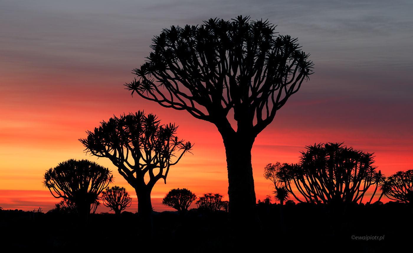 Niebo nad lasem drzew kołczanowych, Namibia