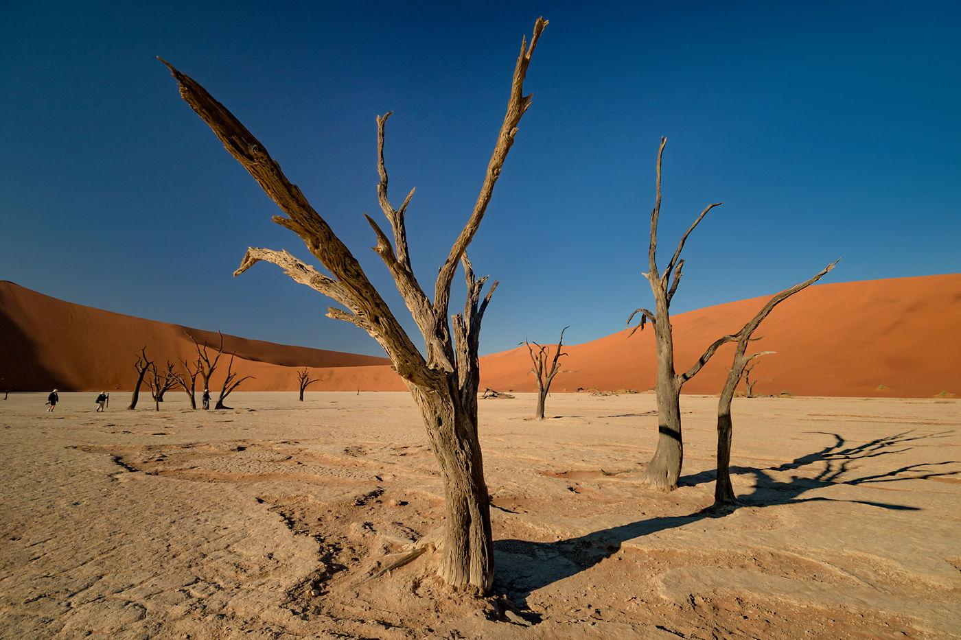 Deadvlei o poranku, Namibia
