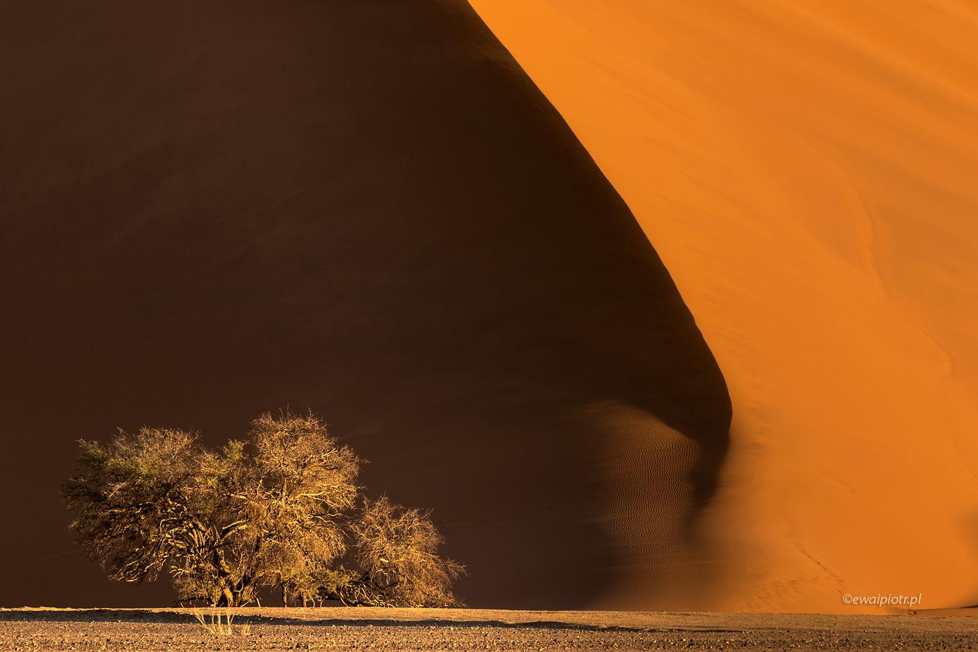 Wydmy Namibii