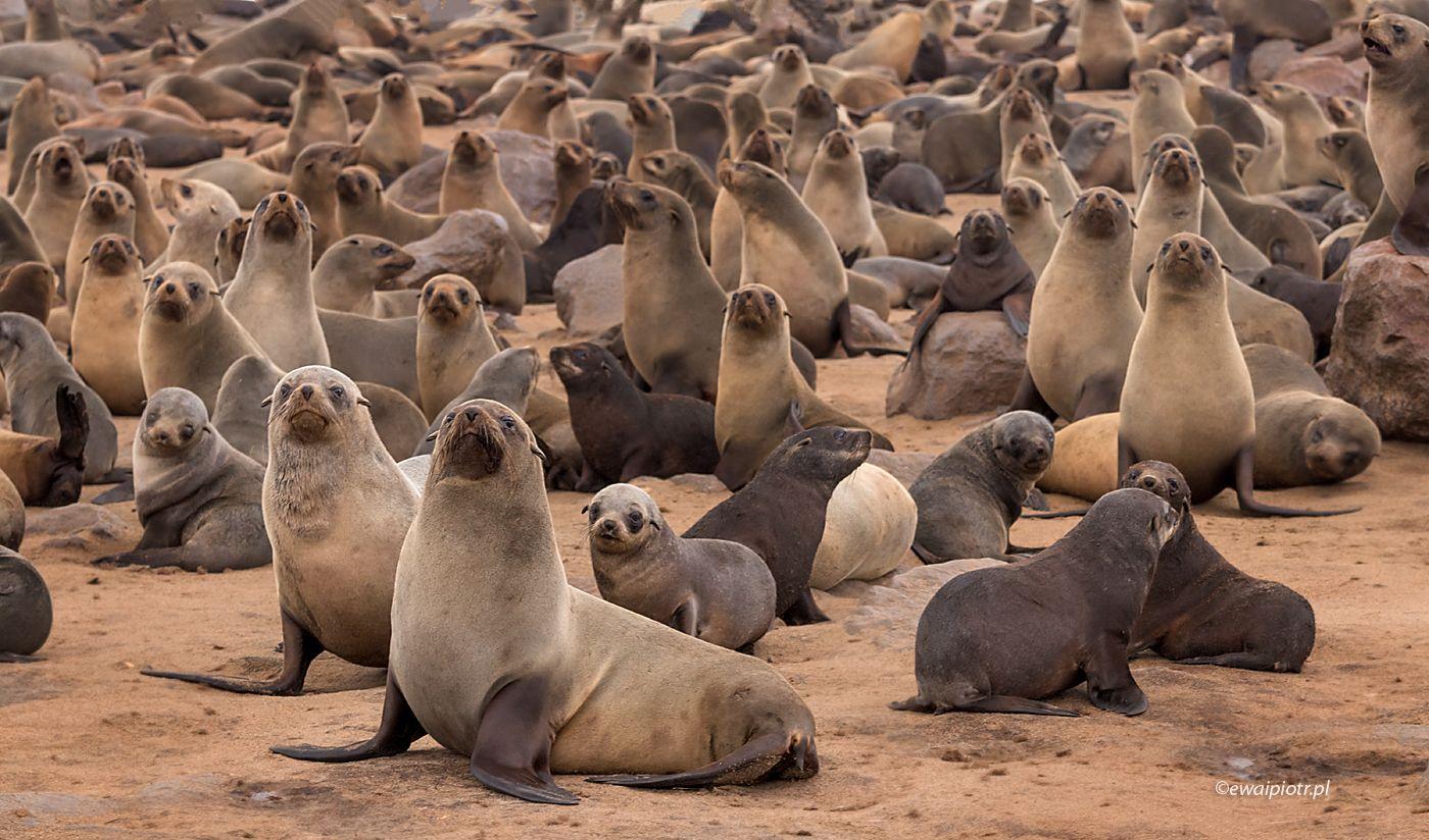 Kolonia Uchatek, Namibia