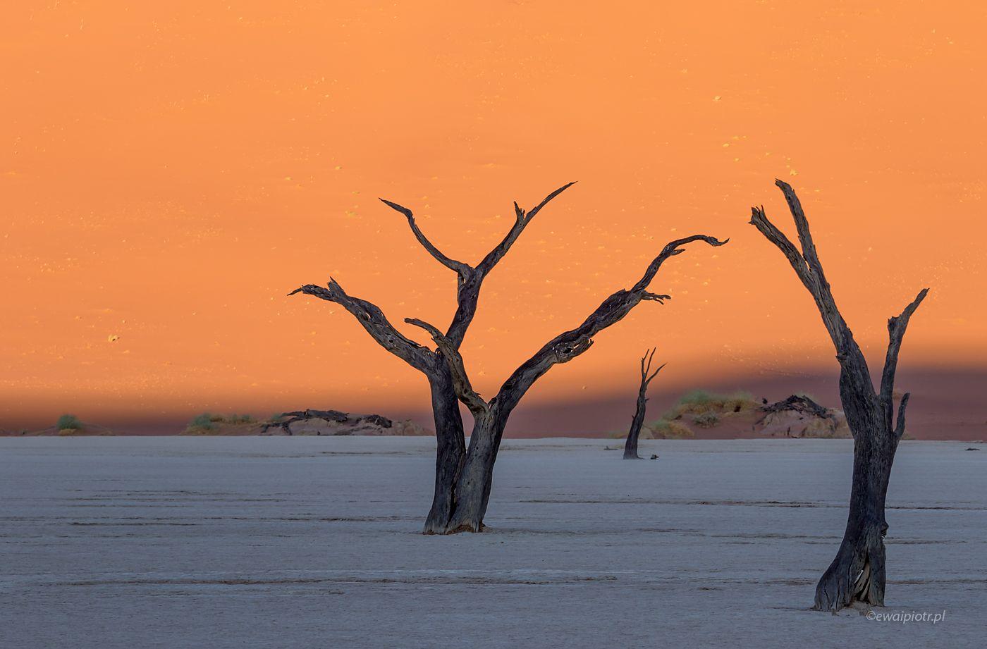 Dwa drzewa na Deadvlei, Nambia
