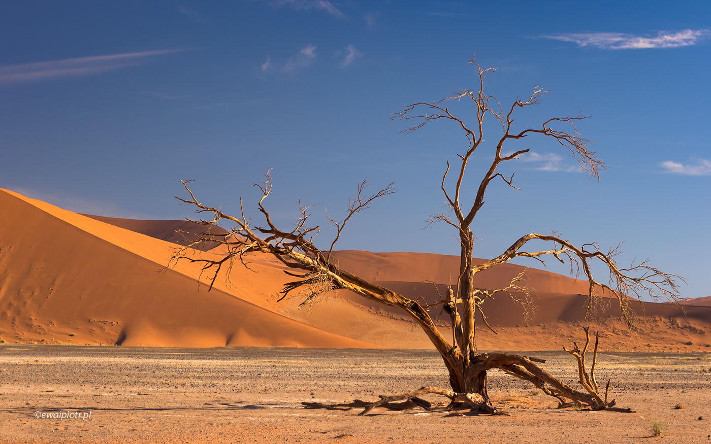 Wydma i drzewo, Namibia