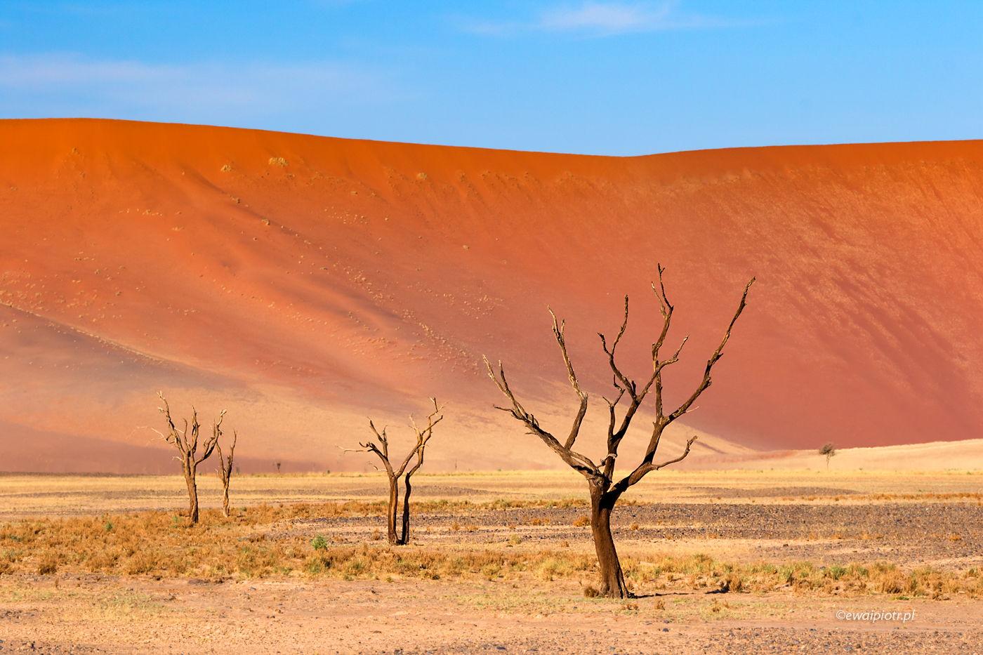 Drzewa pustyni Namib, Namibia, pozycja a perspektywa