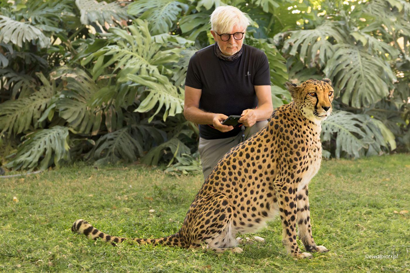 Gepard w ogrodzie, Namibia