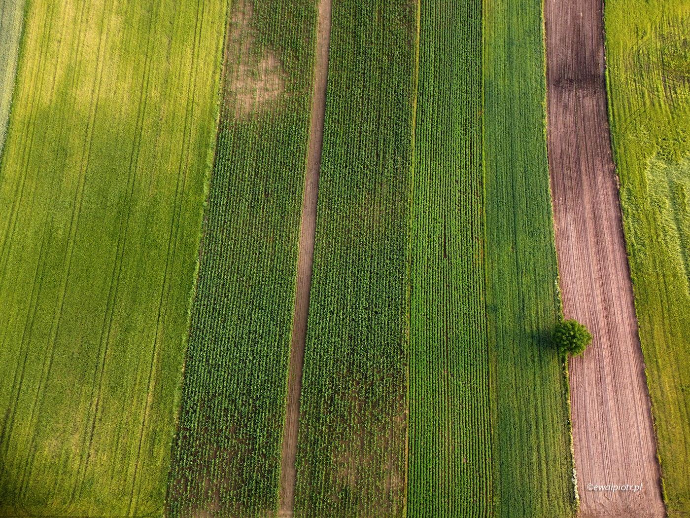 Świętokrzyskie pola z drona, DJI Mini - przepisy w Polsce