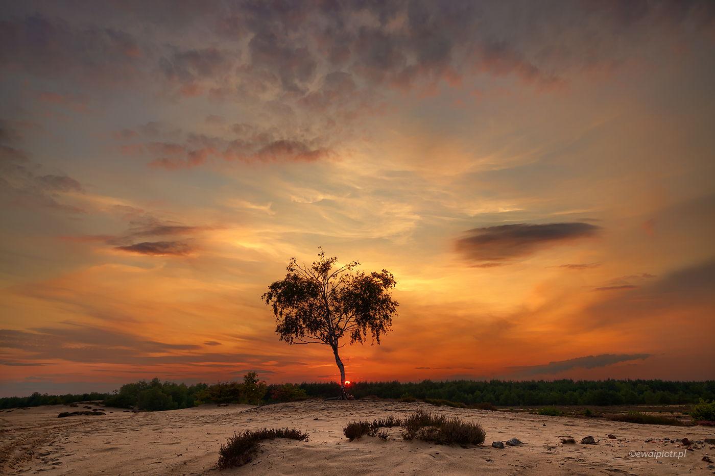 Zachód słońca na Wielkiej Wydmie, Wrzosowa Kraina