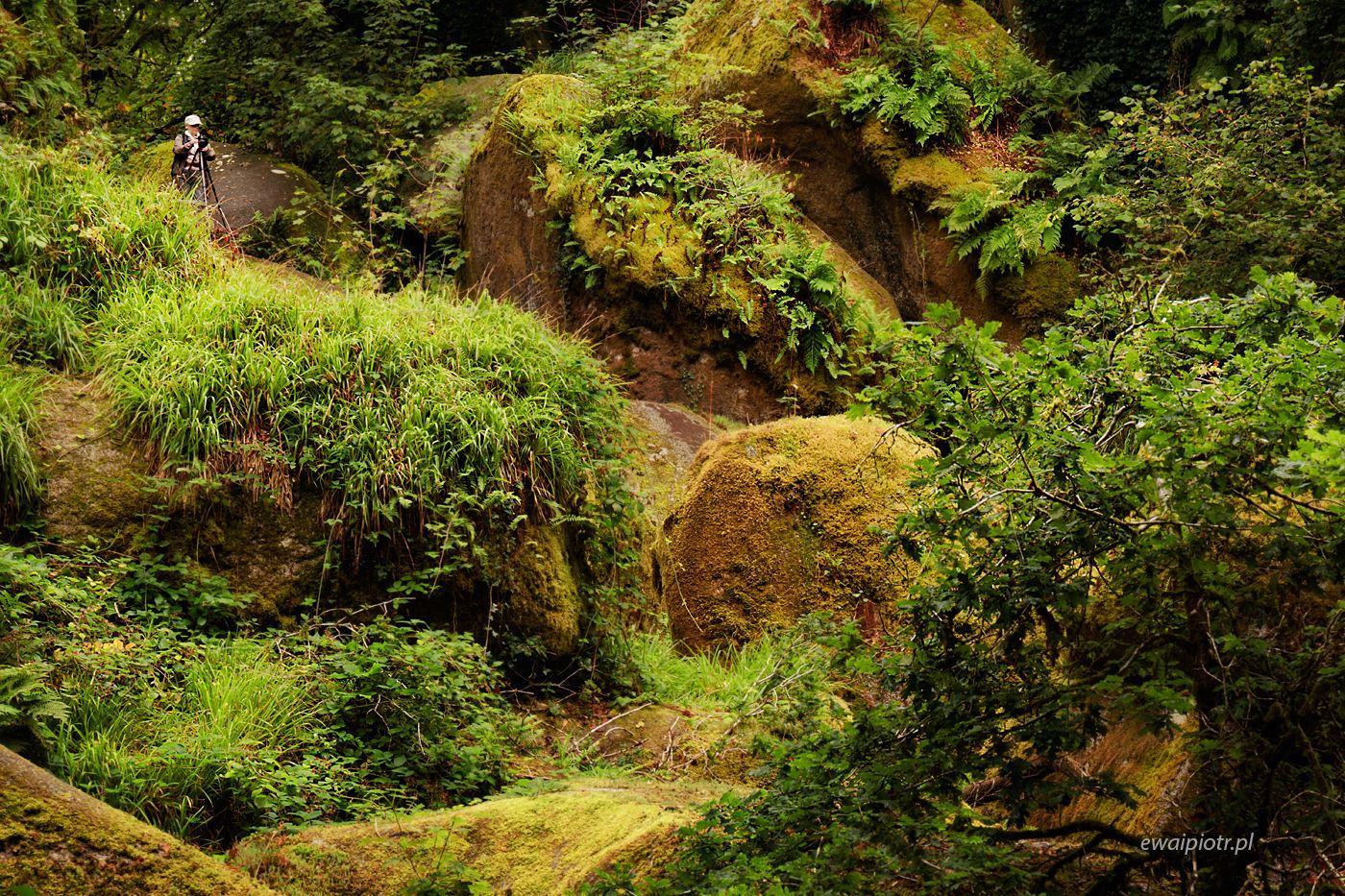 Głazy w lesie Huelgoat, Bretania