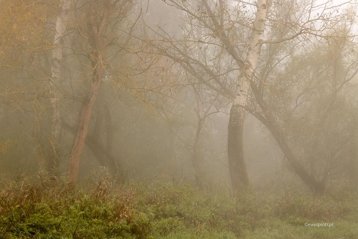 Las we mgle, Świętokrzyskie, plener fotograficzny